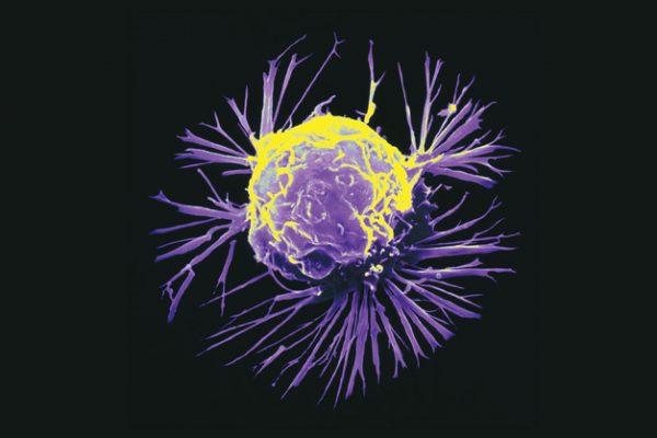 Células com o poder de matar