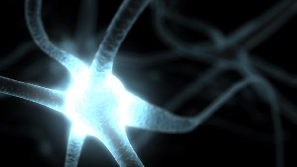 O que um neurónio diz a outro neurónio