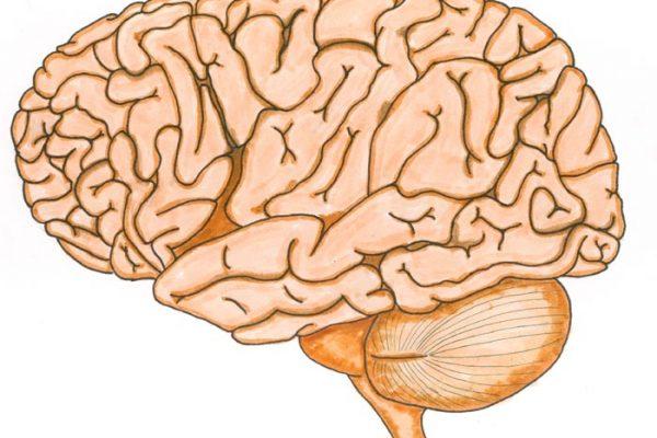"""O meu cérebro """"cresce"""" com os outros"""