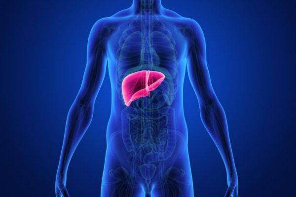 O fígado pode engordar?